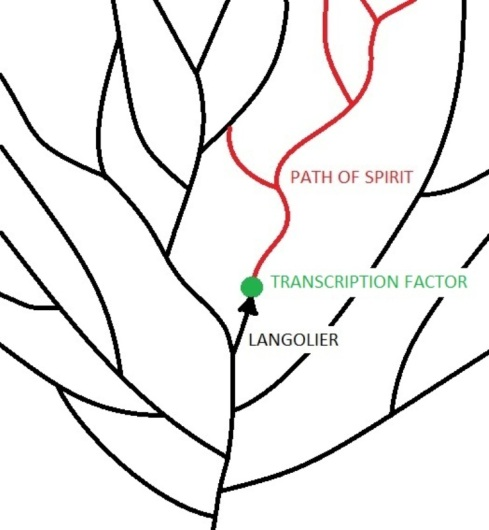 Langoliers and TransciptIon Factors